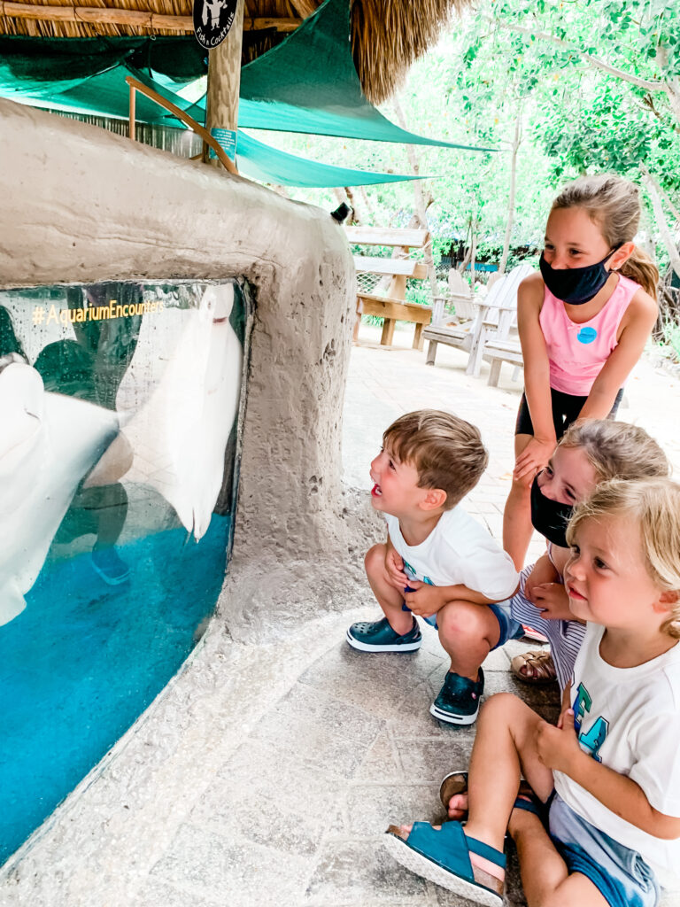 Aquarium encounters, the dolphin research center review, Things to do in marathon, florida, family friendly things to do in marathon, family friendly places to visit in Florida, Safe places to visit in florida, the florida keys, key west, florida travel, marathon, new cases