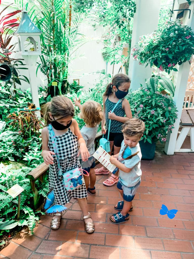 the butterfly garden, key west Florida